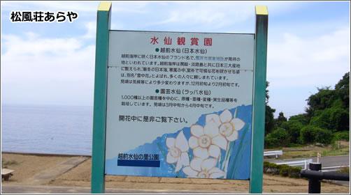 越前海岸 水仙ミュージアム