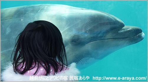 越前松島水族館