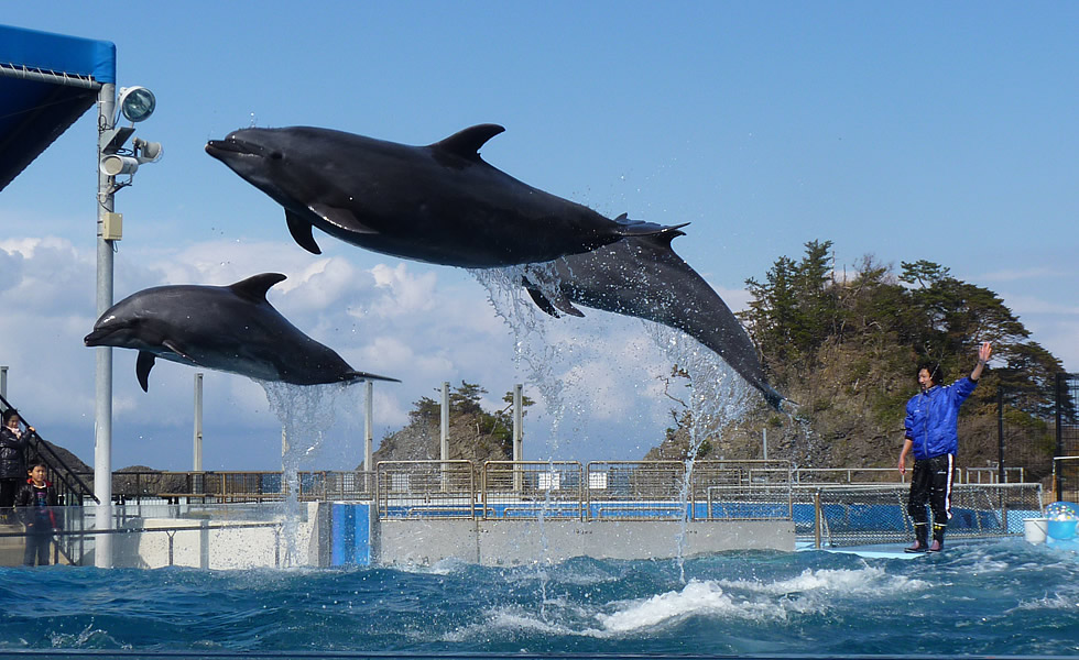 写真6「越前松島水族館」