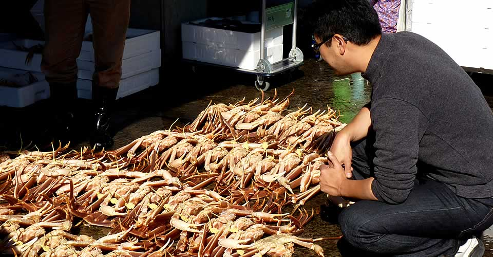越前蟹漁と競り